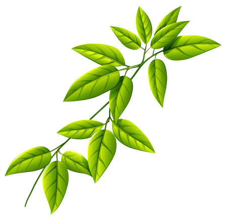 stomata: Illustration of a leafy plant on a white background