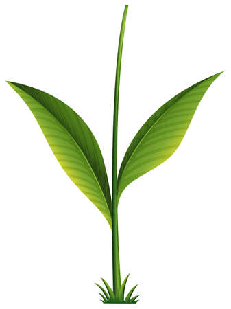 plantae: Illustration of a green plant on a white background