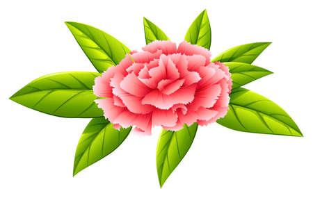 plantae: Illustration of a carnation pink flower on a white background