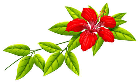 magnoliophyta: Illustration of a plant with a red flower on a white background Illustration