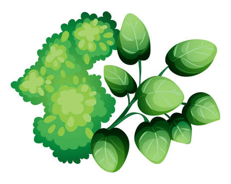 Illustration of a topview of the green leafy plants on a white background Illustration