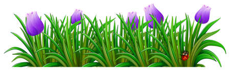 beautification: Illustration of a flowering plant with violet flowers on a white background Illustration