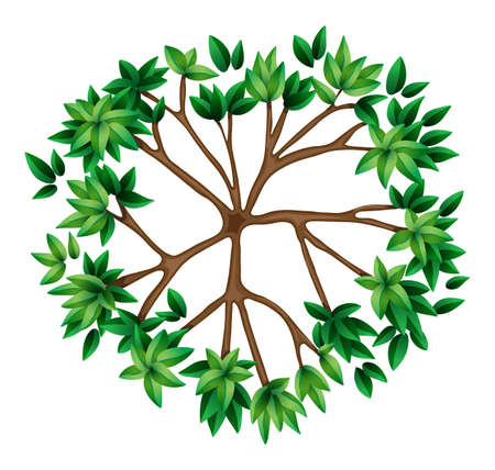 tree top view: Illustration of a top view of a plant on a white background