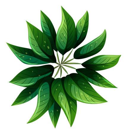 Illustratie van een luchtfoto van een groene plant op een witte achtergrond