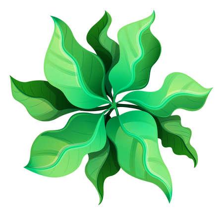 Illustratie van een birdeye uitzicht op een groene plant op een witte achtergrond