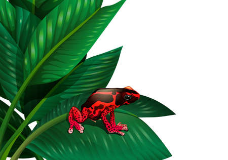 anura: Illustration of a red frog on a white background Illustration