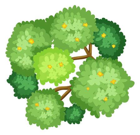 상단: 흰색 배경에 나무의 공중보기의 그림