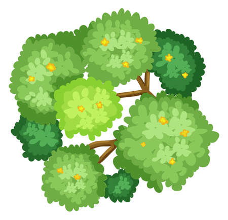 Illustration of an aerial view of a tree on a white background Illustration