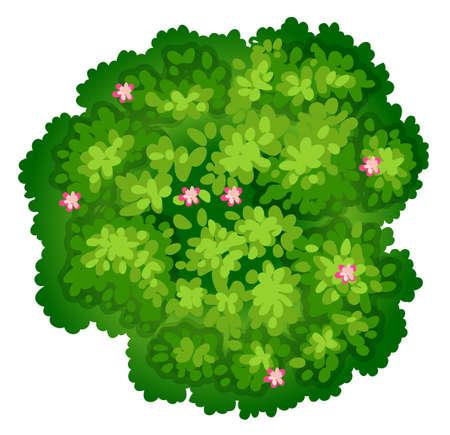 Illustratie van een birdeye weergave van een plant op een witte achtergrond