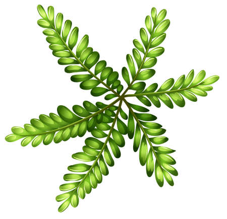 plantae: Illustration of a topview of a fern on a white background
