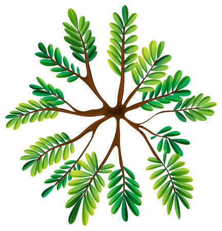 Illustration of a topview of a fern plant on a white background