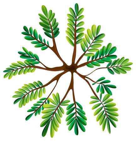 Illustratie van een bovenaanzicht van een varen plant op een witte achtergrond
