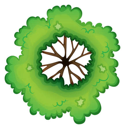 plantae: Illustration of a birdeye view of a green plant on a white background Illustration