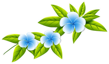 beautification: Illustration of the blooming white flowers on a white background