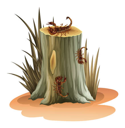 arachnida: Illustration of a stump with scorpions on a white background