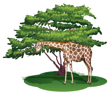 herbivorous: Illustration of a giraffe under the tree on a white background