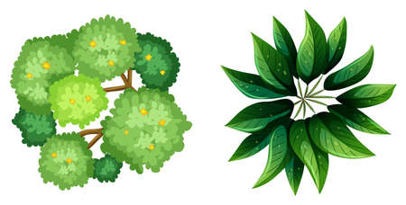 Illustration of a topview of a plant on a white background Vector