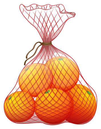 rosids: Illustration of a pack of ripe oranges on a white background Illustration