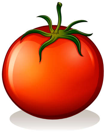 Illustration of a big ripe tomato on a white background