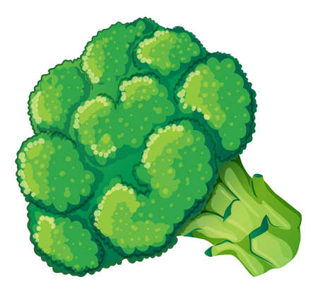 scientific farming: Illustration of a broccoli on a white background