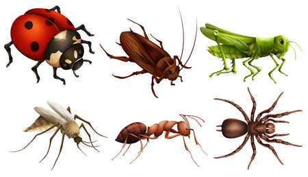 insecta: Illustration of the different insects on a white background