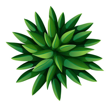 bovenaanzicht plant: Illustratie van een bovenaanzicht van een groene landscaping plant op een witte achtergrond