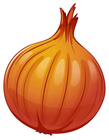 scientific farming: Illustration of an onion on a white background Illustration