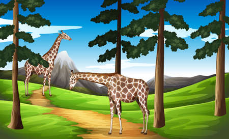 g giraffe: Illustration of the giraffes in the forest