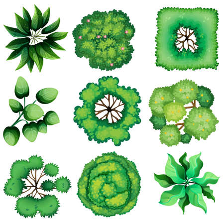 aerial views: Illustration of the topview of leaves on a white background Illustration