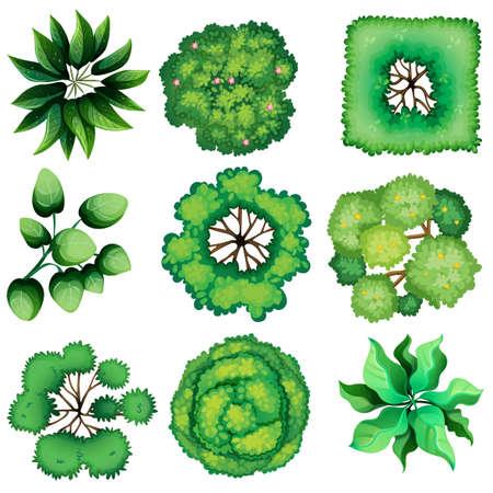 Ilustración de la vista superior de las hojas sobre un fondo blanco Ilustración de vector