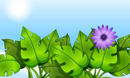 stomata: Illustration of the green leaves