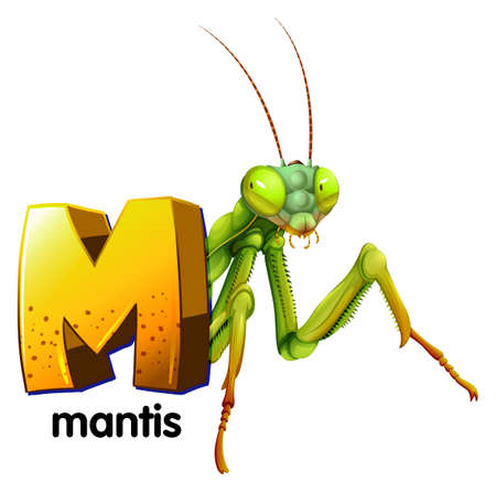 insecta: Illustration of a letter M on a white background Illustration