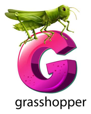 Illustration of a letter G for grasshopper on a white background