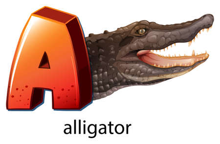 alligator eyes: Illustration of a letter A for alligator on a white background