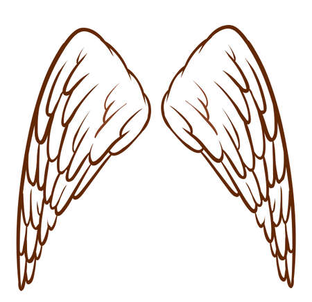 hindwing: Illustration of an angels wings on a white background