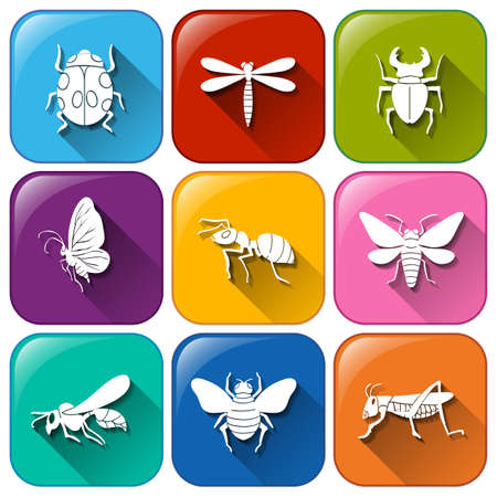 Illustration of the icons with insects on a white background Illustration