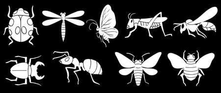 insecta: Illustration of the different insects on a black background