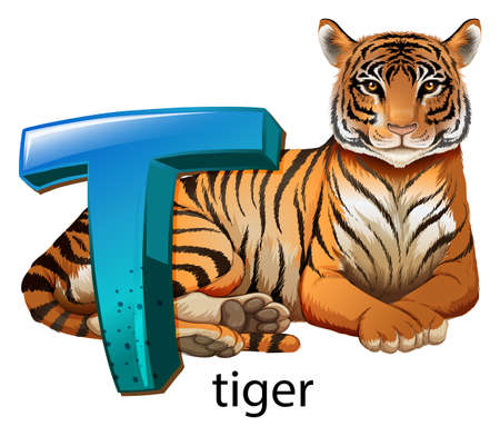 panthera tigris sumatrae: Illustration of a letter T for tiger on a white background