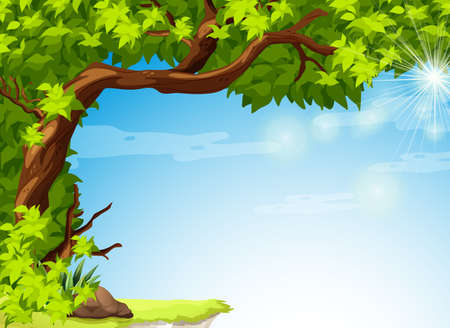 shinning leaves: Illustration of a tree with green leaves and the clear blue sky Illustration