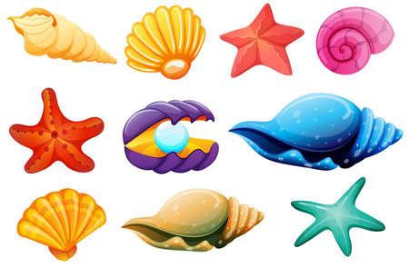 blanco: Ilustración de una colección de conchas sobre un fondo blanco
