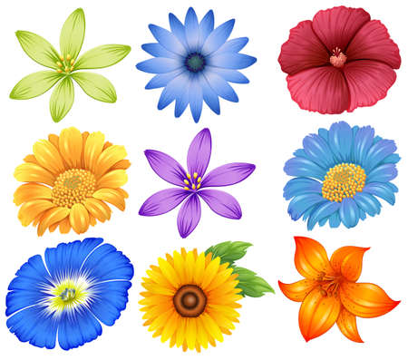 Illustration of the colourful flowers on a white background Vector