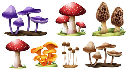 macroscopic: Illustration of the different types of mushrooms on a white background Illustration