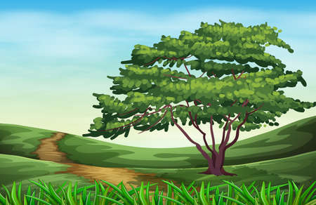 grass land: Illustration of a beautiful landscape with a tall tree Illustration