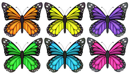 pieridae: Illustration of the colourful butterflies on a white background  Illustration