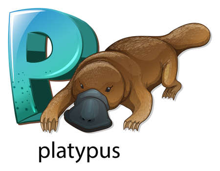 webbed: Illustration of a letter P for platypus on a white background  Illustration