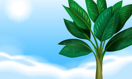 Illustration of a clear blue sky and the green leaves Illustration