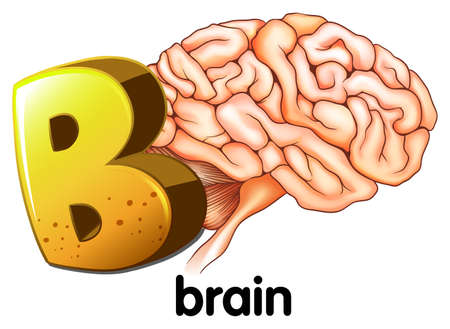 Illustration of a letter B for brain on a white background