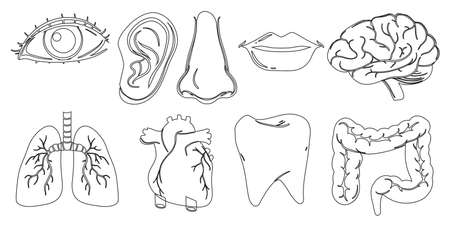 body parts: Illustration of the doodle design of the different internal and external body parts on a white background