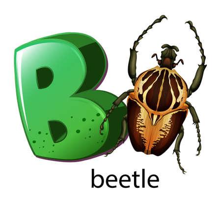 Illustration of a letter B for beetle on a white background  Illustration