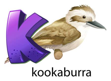 chordata: Illustration of a letter K for kookaburra on a white background